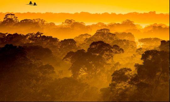 Canopée amazonienne Patrick GALLET